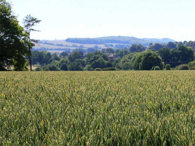 Farm Commercial for sale in Market Lavington, Lavington, Wiltshire, SN10