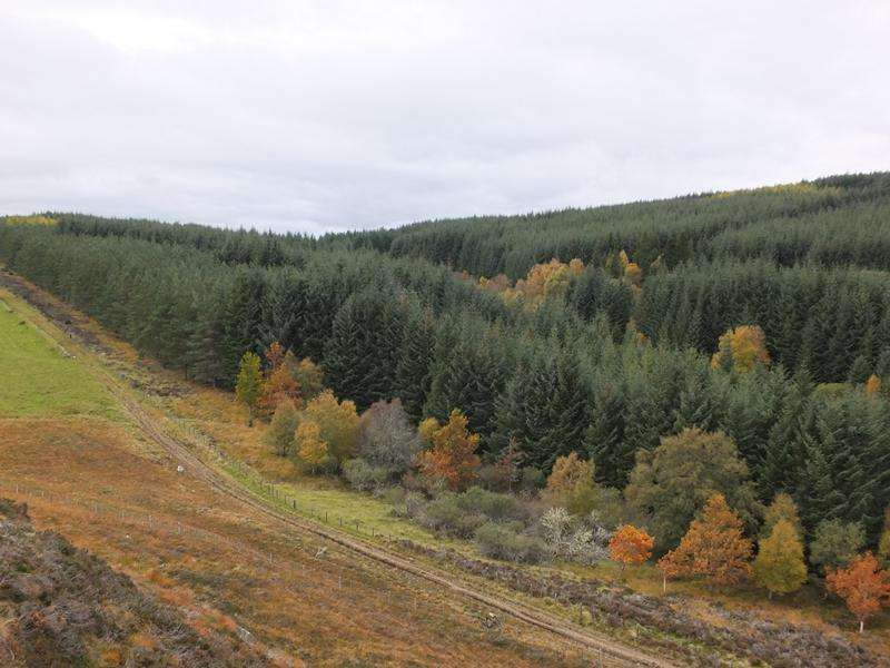 Land Commercial for sale in Balnabeeran Forest, Near Errogie, Inverness-shire IV2