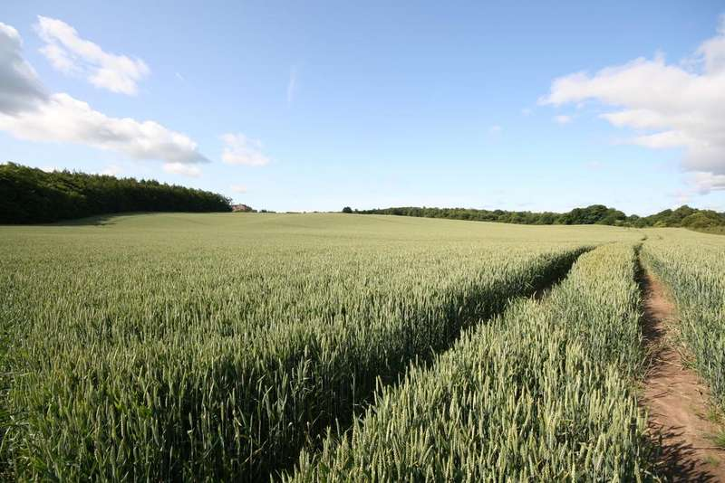 Farm Land Commercial for sale in Cluny, Kirkcaldy Ky2
