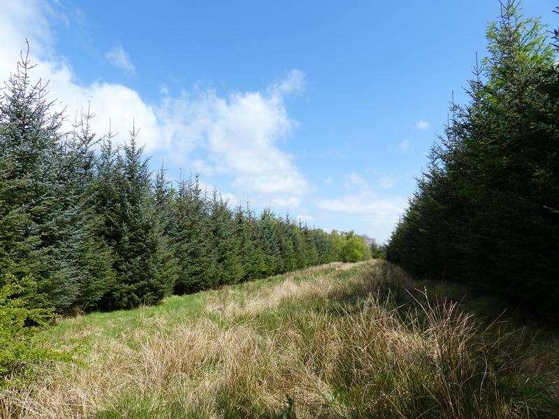 Land Commercial for sale in Shiel Wood, Nr Sorn, East Ayrshire KA5