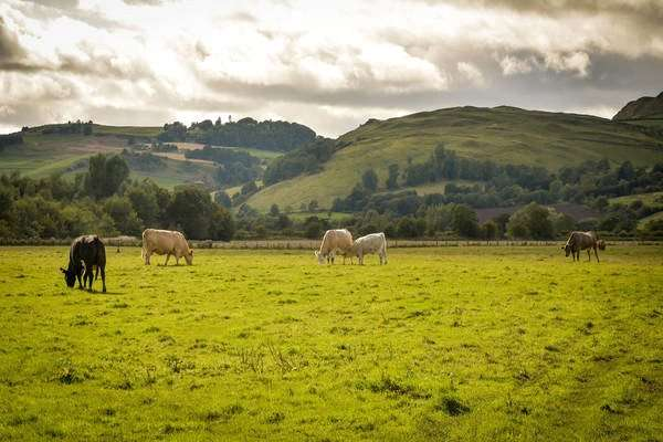 Farm Commercial for sale in North Inchmichael Farm, Errol, Perth, Perthshire, PH2