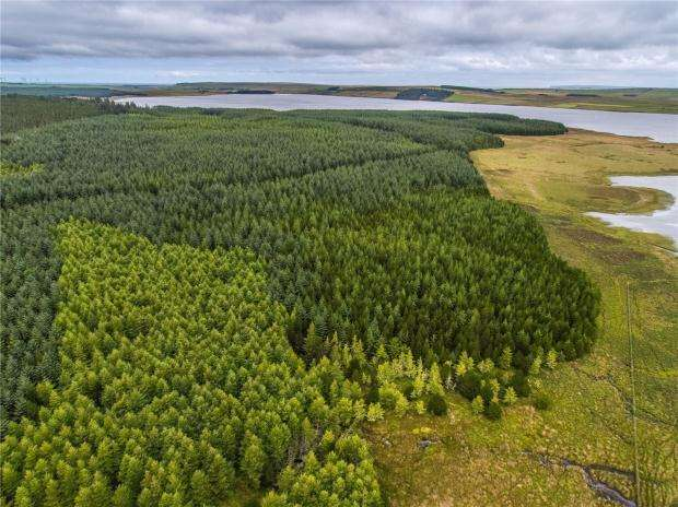 Land Commercial for sale in Brawlbin Forest, Near Thurso, Caithness