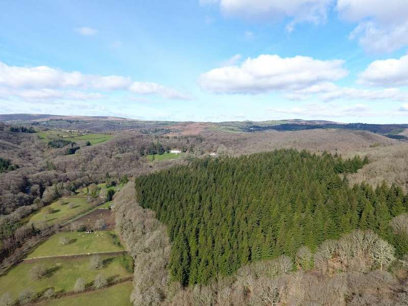 Land Commercial for sale in Ausewell Wood, Ashburton, Devon TQ13