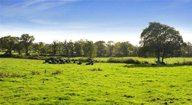 Land Commercial for sale in Lot 4 - Shobrooke Farm, Morchard Road, Crediton, Devon, EX17