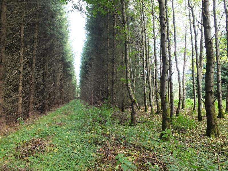 Land Commercial for sale in Finnygaud Woodland, Aberchirder, Aberdeenshire AB45