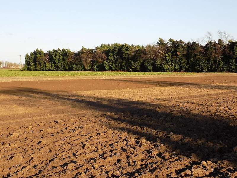 Land Commercial for sale in Fleet Road, Holbeach