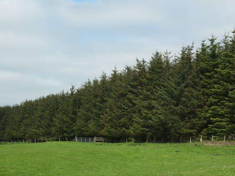 Land Commercial for sale in Achvraid Wood House Plot, By Inverness, Inverness-shire