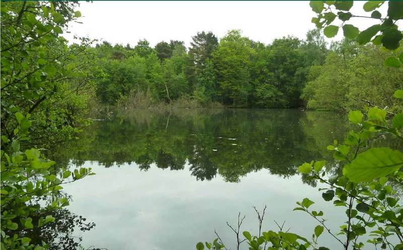 Land Commercial for sale in POTTERS POOL WOOD,MYTCHETT,CAMBERLEY,GU16 6PA, Mytchett, Camberley