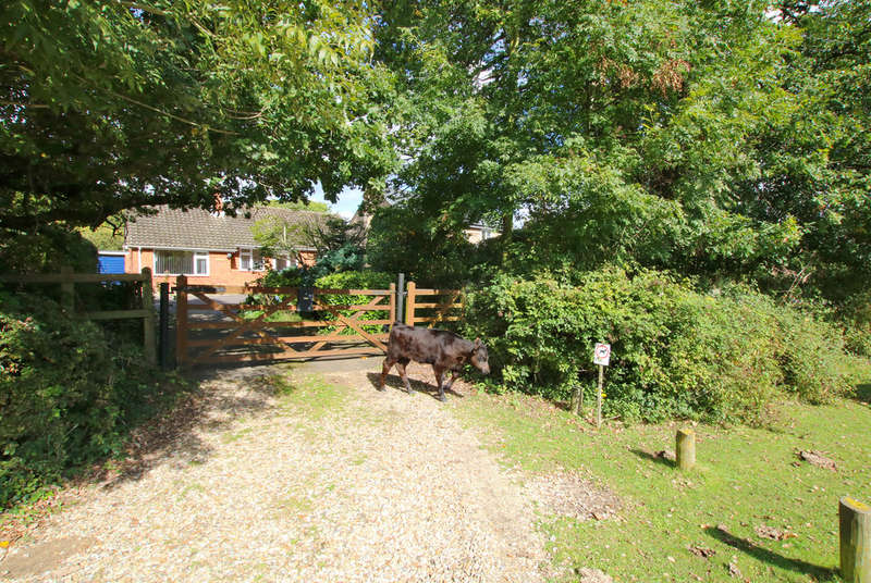 3 Bedrooms Detached Bungalow for sale in May Lane, Pilley, Lymington, Hampshire