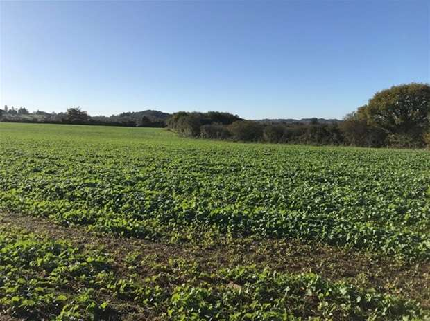 Land Commercial for sale in Fairwood Road