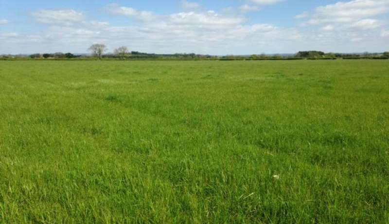 Land Commercial for sale in Between Salton / Brawby, Moor Lane Track, Kirkbymoorside