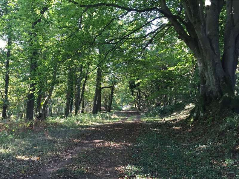 Land Commercial for sale in Chaffcombe, Chard, Somerset