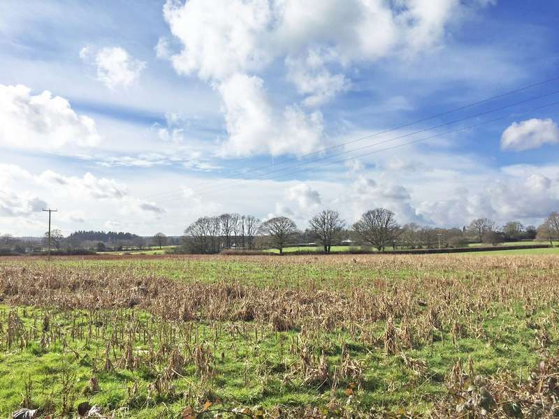 Land Commercial for sale in Landford Wood, Salisbury, Wiltshire, SP5