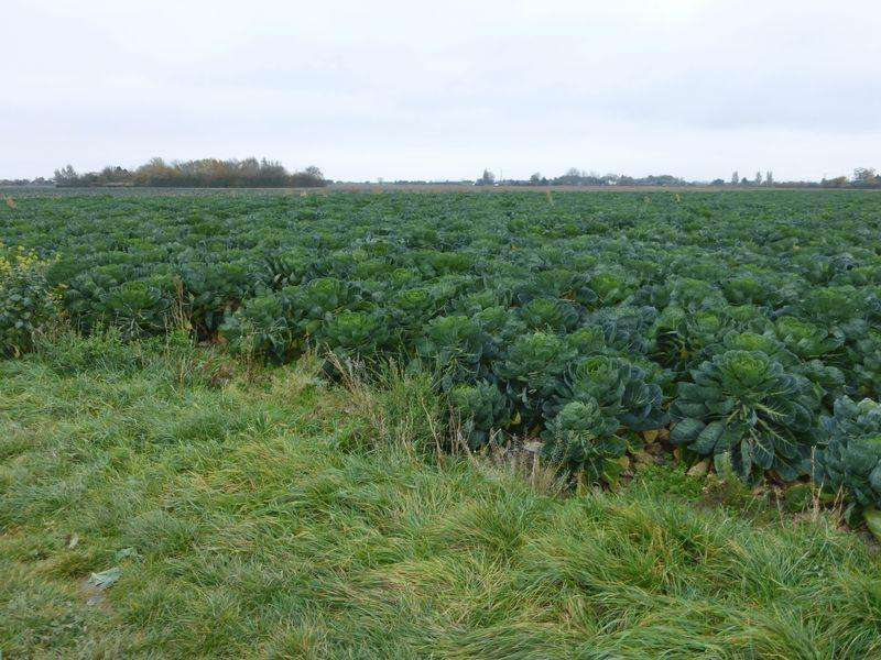 Land Commercial for sale in 18.915 acres Old Leake Leverton