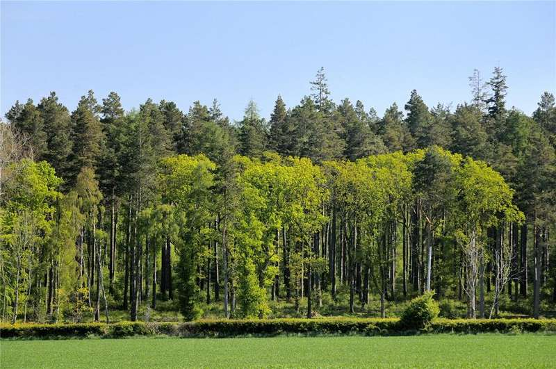 Land Commercial for sale in Bolton Muir Wood, Haddington, East Lothian, EH41