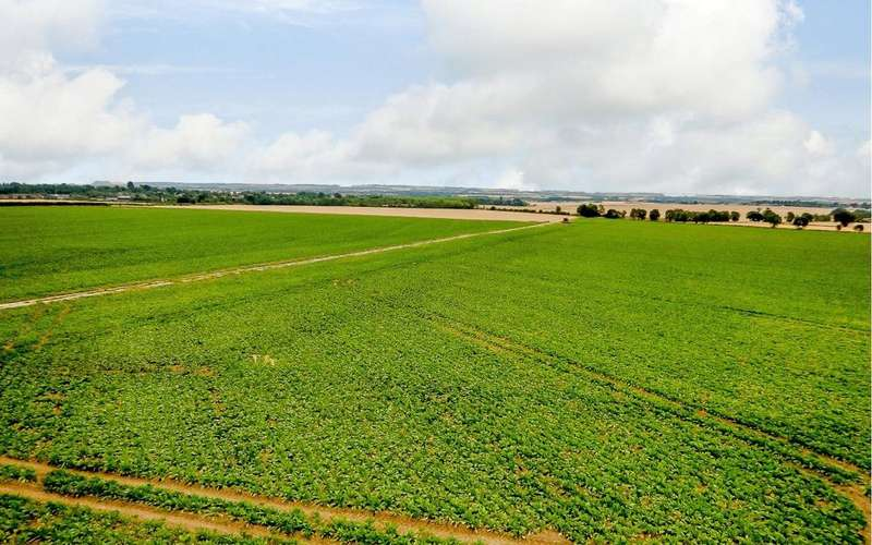 Land Commercial for sale in Potton Road, Wrestlingworth, Sandy, Bedfordshire