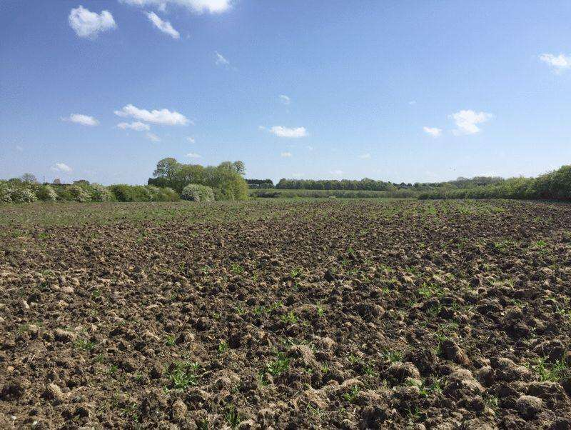 Land Commercial for sale in 6.61 Acres Arable Land, Martin (In 2 Lots)