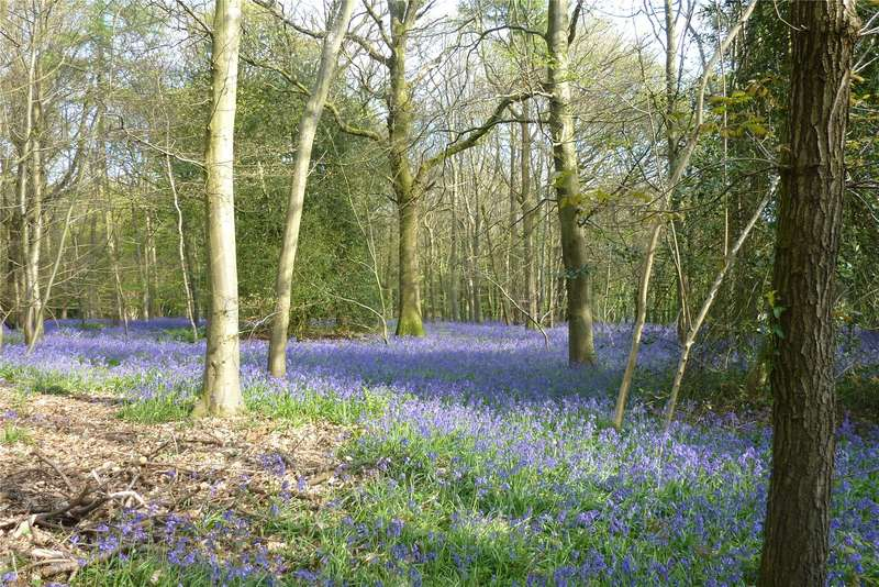 Land Commercial for sale in Stoke Wood, West Stoke