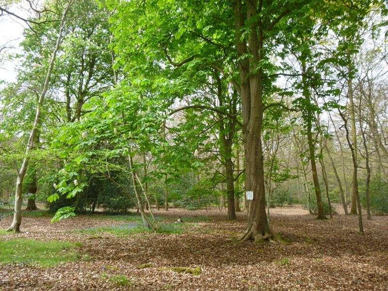 Land Commercial for sale in Brockhurst Wood, Farnham Common, near Gerrards Cross, Buckinghamshire