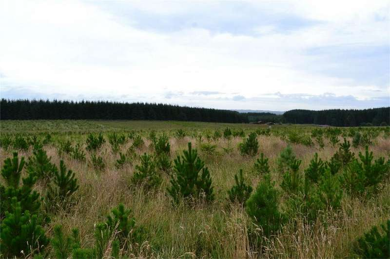 Land Commercial for sale in Blackaburn, Wark, Northumberland