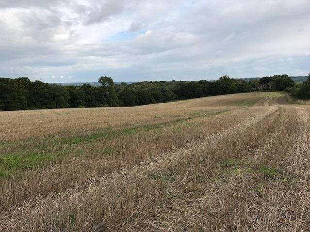 Land Commercial for sale in Marlow