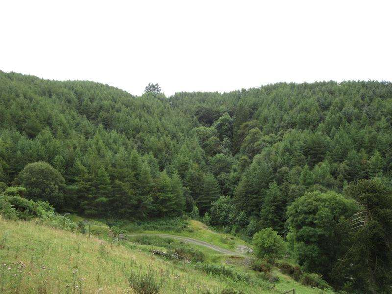 Land Commercial for sale in Cwm Wood, near Newtown, Powys SY16