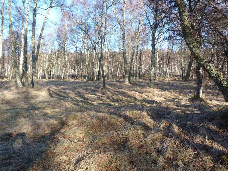 Land Commercial for sale in Kincraig, PH21 1ND