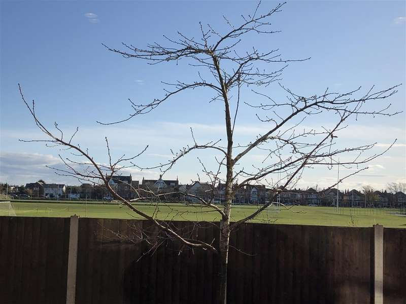 2 Bedrooms Flat for sale in Harrison View, Bailey Avenue, Lytham St Annes