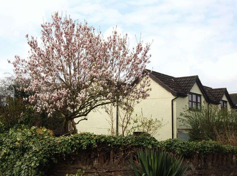 4 Bedrooms Cottage House for sale in Williams Field Lane, Monmouth