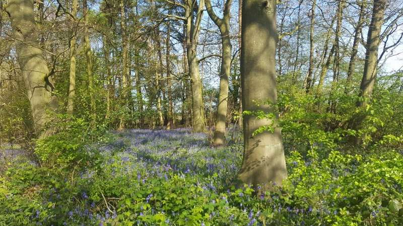 Land Commercial for sale in Alder Wood, Flamstead, Hertfordshire AL3