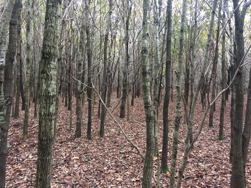 Land Commercial for sale in Woodland at Little Common, Bexhill-on-Sea