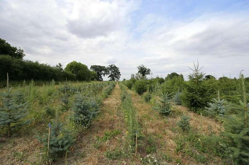 Land Commercial for sale in Watton Road, Great Hockham