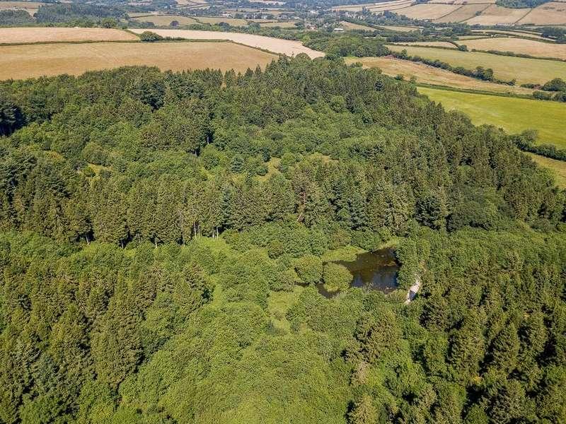 Land Commercial for sale in Wynford Wood, Wynford Eagle, near Dorchester, Dorset DT2