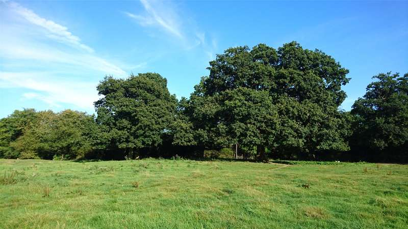 Land Commercial for sale in Temple Lane, Capel, Dorking, Surrey, RH5