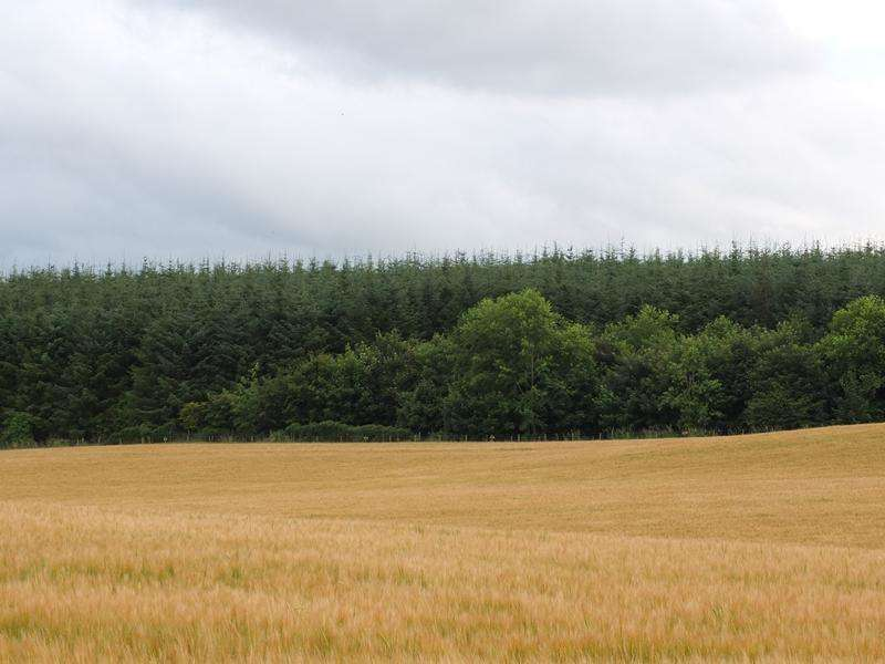 Land Commercial for sale in Woodtown Wood, Near Turriff, Aberdeenshire AB53