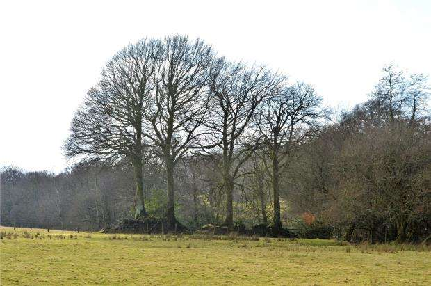 Land Commercial for sale in Land at Four Beeches Farm, Lake, Sourton, Devon