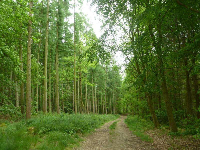 Land Commercial for sale in Blacklands Copse, 77.04 acres of woodland at Upper Bucklebury, Thatcham, near Newbury RG7 6EL