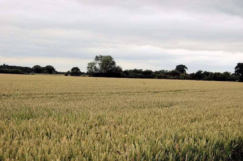 Land Commercial for sale in Thorganby, York