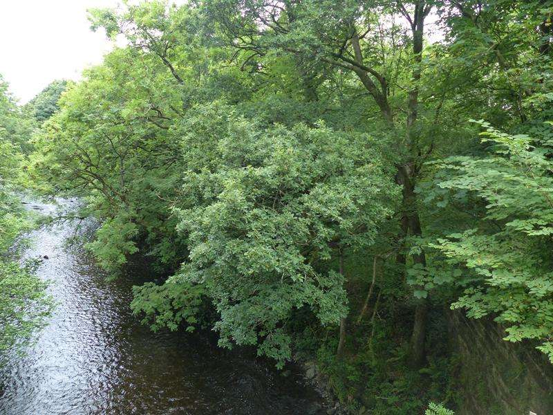 Land Commercial for sale in Station Yard Wood, Near Dumfries, Dumfries and Galloway DG2