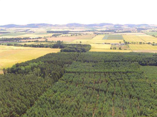 Land Commercial for sale in Strelitz Wood, Burrelton, Blairgowrie, Perth and Kinross