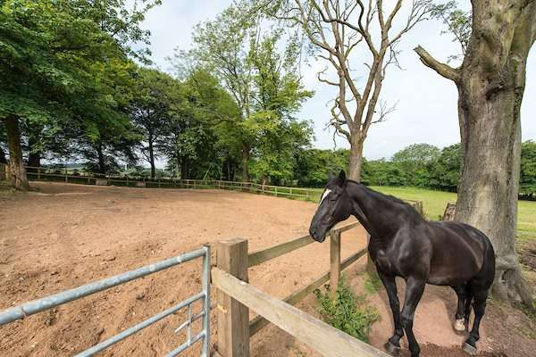 4 Bedrooms Equestrian Facility Character Property for sale in Pirnie Lodge Farm, Slamannan, Falkirk, Stirlingshire, FK1