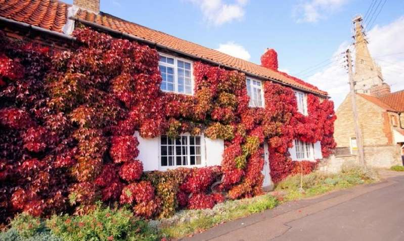 4 Bedrooms Cottage House for sale in Church Lane, Coleby