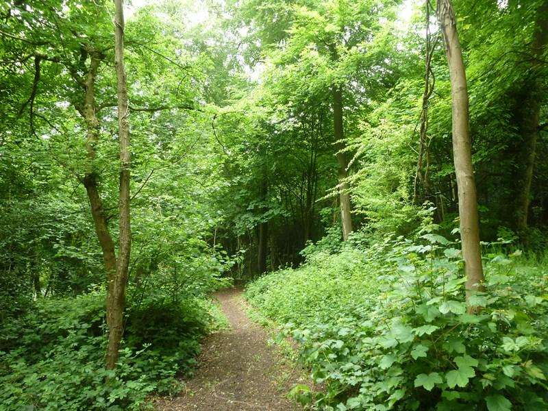 Land Commercial for sale in Lucas Wood, High Wycombe, Buckinghamshire 2.51 ha (6.21 acres) of woodland