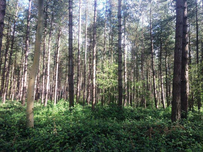 Land Commercial for sale in Hyde Wood, 40.26ha/99.46ac of woodland at Risby, Bury St Edmunds IP28 6RR