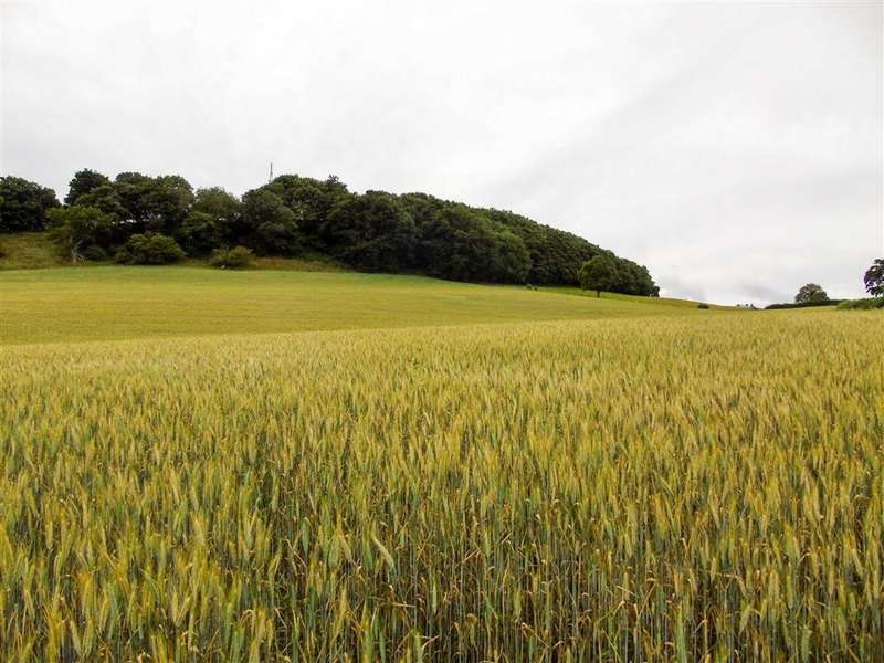 Farm Land Commercial for sale in Land Part Of Hydan Fawr, Cyfronydd, Welshpool, Powys, SY21