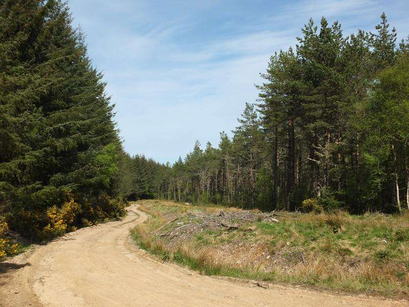 Land Commercial for sale in Newmore Wood, Nr Invergordon, Ross Cromarty IV18