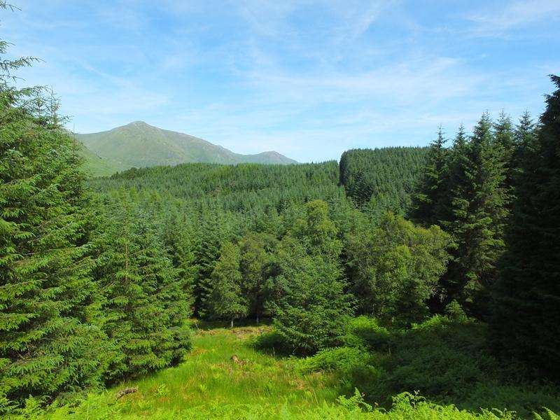 Land Commercial for sale in Ardeatle Forest, Loch Awe, Argyll PA33