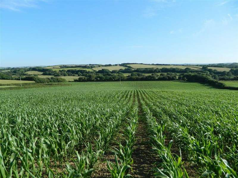 Land Commercial for sale in Hele, Marhamchurch, Bude, Cornwall, EX23