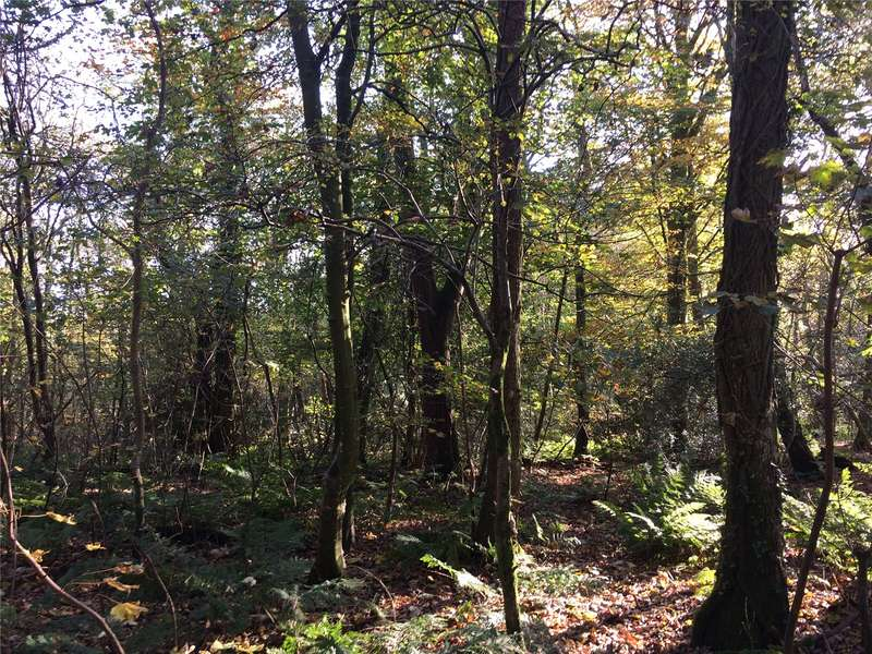 Plot Commercial for sale in Plot At Bogfoot Woodland, Southwick, Dumfries, Dumfries and Galloway, South West Scotland, DG2