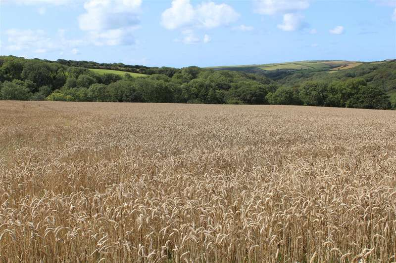 Land Commercial for sale in Welcombe, Bideford
